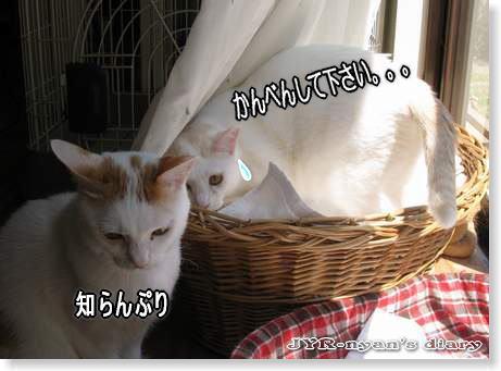 umikou110420