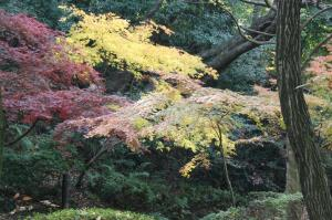 錦繍の秋2009