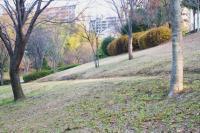 新春の緑道4