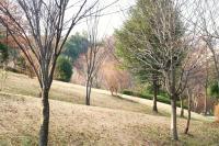 新春の緑道3