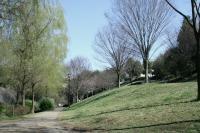 新春の緑道1
