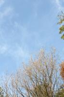 木々達の息遣い0