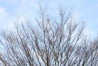 木々達の息遣い3