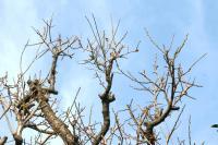 木々達の息遣い1