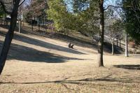冬の緑道斜面b