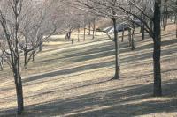 冬の緑道斜面e