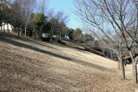 冬の緑道斜面c
