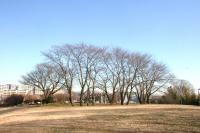 冬の緑道斜面3