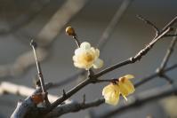 赤白黄色の花5