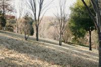 冬の緑道斜面a