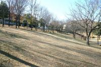 冬の緑道斜面f