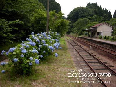 200906紫陽花01