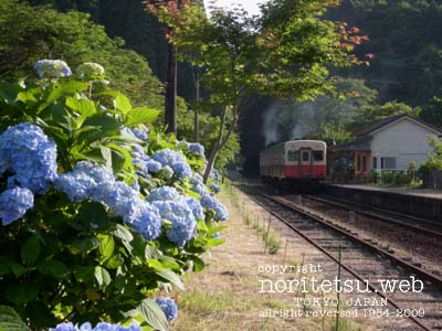 200906紫陽花02
