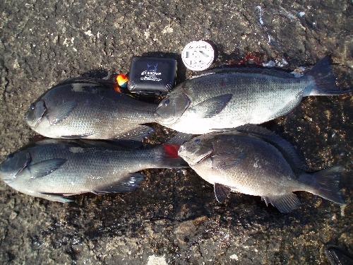 毛利門川釣果