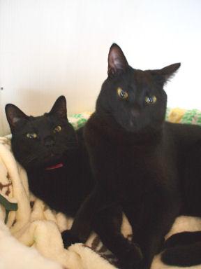 黒猫コンビ