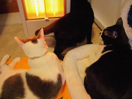 4猫きょうだい