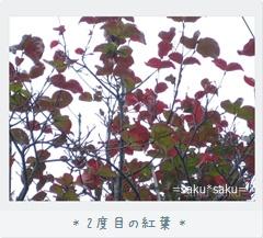 2度目の紅葉(*^_^*)