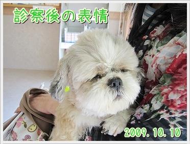 20091013(3).jpg