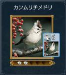 カンムリチメドリ