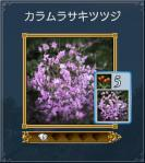 04_カラムラサキツツジ