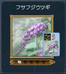 05フサフジウツギ