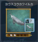 11ヨウスコウカワイルカ