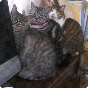 我が家のバカ猫三人衆-1