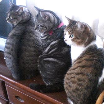 我が家のバカ猫三人衆-2