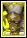 org080 クセルクセスカード