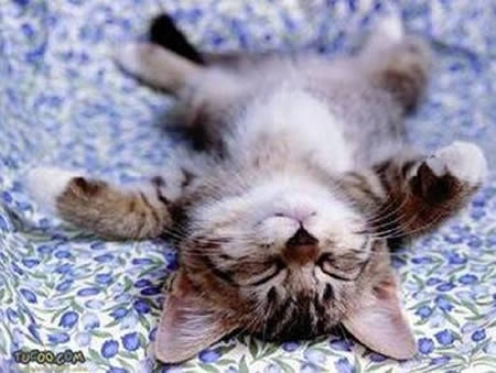 20-cute-and-funny-animal-sleeping-positions01.jpeg