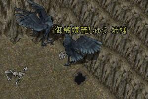 羽をモがせて下さい・・・いぇ、すいません、もぉ羽は要りませんです
