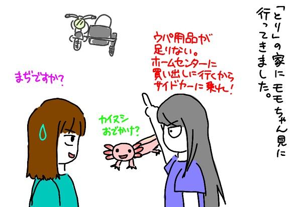 20110731momo_fc2.jpg