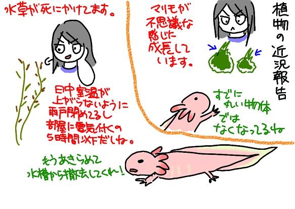 20110815水草_fc2