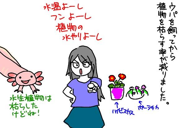20110829植物_fc2