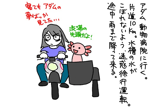 20110911動物病院1_fc2