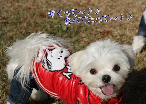 DSC01439_20100103232108.jpg
