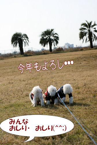 DSC01636_20100103232806.jpg