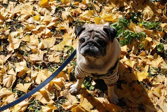 落葉もピカピカ