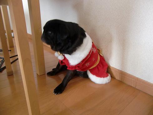 サンタの衣装がかわええね。