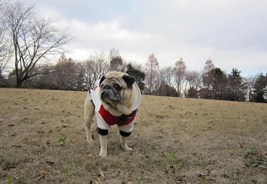 公園にて、チッチ君。
