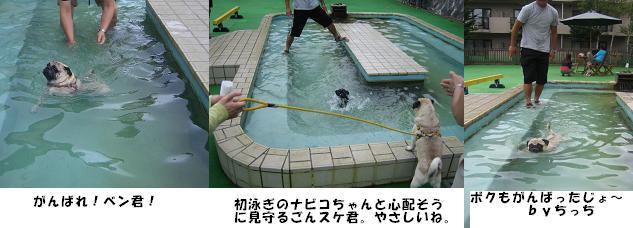 pool 3pugs