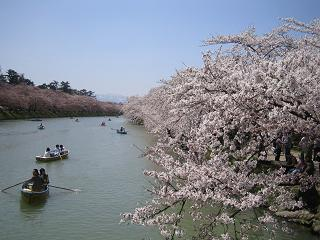 ボートから見る桜もまた格別だね~