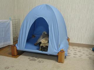 新しいテントだよ~♪