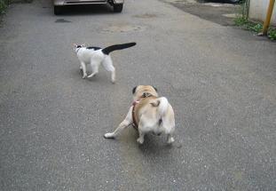 隣の猫をからかってみたり・・・