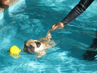 ライフジャケット着けなくても泳げるよ!