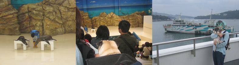 鳥羽水族館、チッチもお魚見たよ~