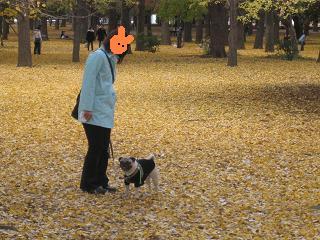 代々木公園の中だよ~