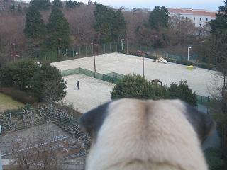 ドッグランを見つめるチッチ