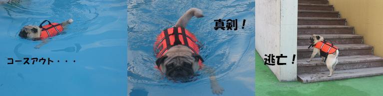 いつまで泳がせるのかあたーん!
