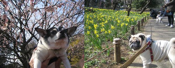園内には春の兆し・・・